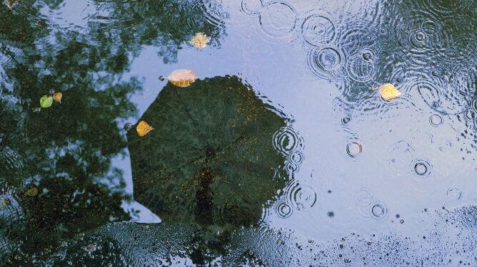 Pogoda na jutro: niże znad Włoch i Skandynawii nad Polską. Będzie padać i wiać
