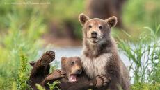 Yarin Klein/Comedy Wildlife Photo Awards 2020