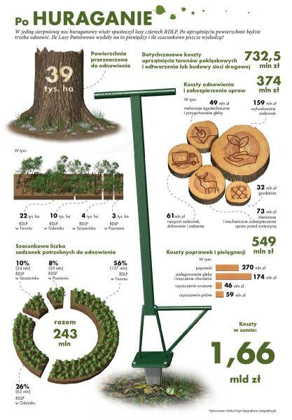 Wiosną rusza akcja odnowy zniszczonych terenów (Lasy Państwowe)