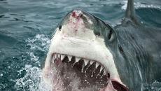 """""""Widziałem rekina z ludzką nogą w szczękach. Wokół pływali ludzie"""""""