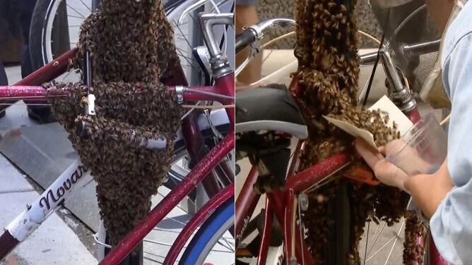 Rój pszczół obsiadł rowery w Chicago