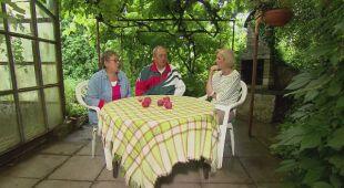 Barwny ogród z altaną pod winoroślą (odc. 540)