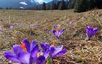 Wiosna wypiera zimę z Tatr